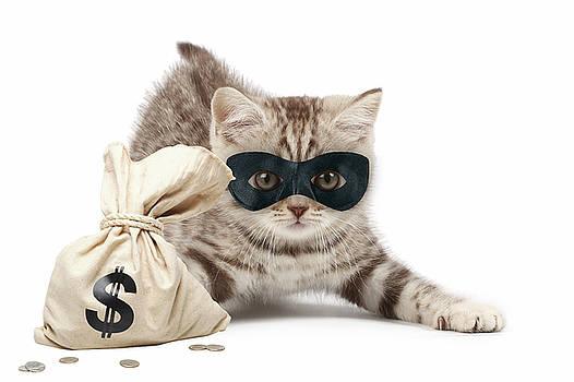 Cat Burglar by Marvin Blaine