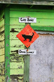 Art Block Collections - Cat Crossing in Moss Landing