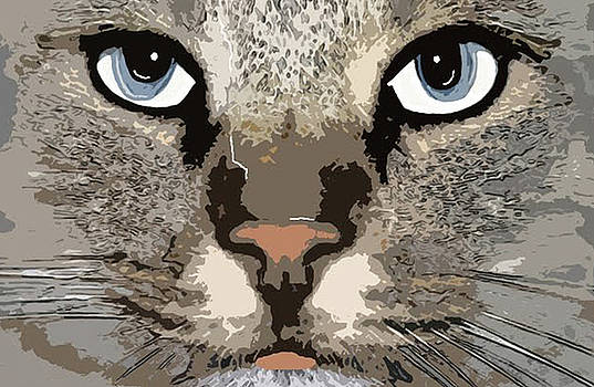 Cat by Cynthia Powell