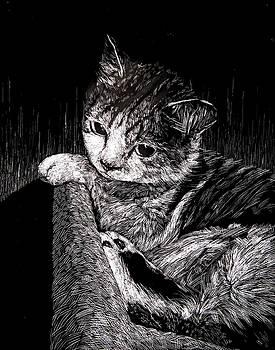 Cat by Ellan Suder