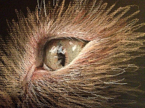 Cat eye by Holly Whiting