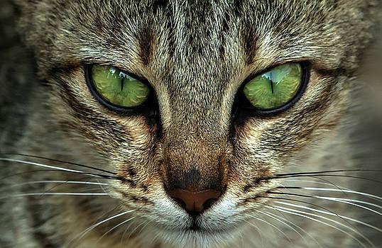 Cat Eye  by Ramabhadran Thirupattur