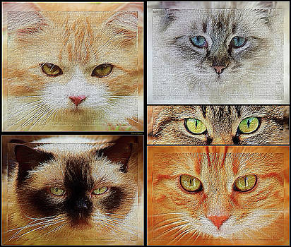 Cat Eyes - Painting by Ericamaxine Price