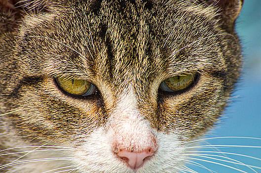 Cat Eyes by Willard Killough III