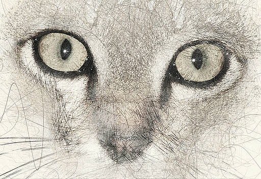 Cat Face by Dray Van Beeck