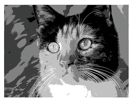 Cat face mixed breed by Patricia Frankel