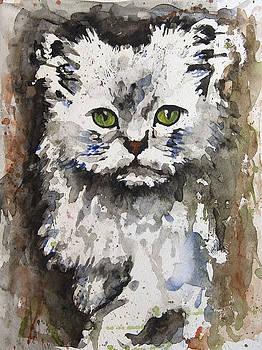 Cat by Ferah Wand