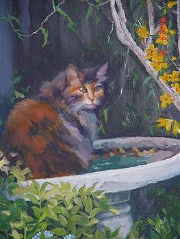 Cat in Bridbath by Carmen Bittenger