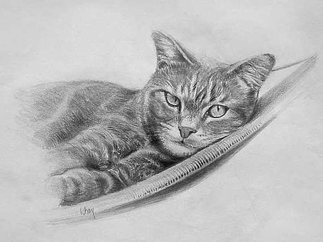 Cat in Hammock by William Hay