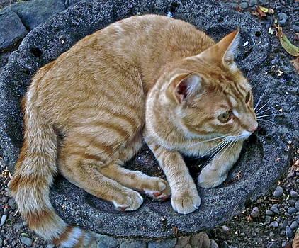 Gwyn Newcombe - Cat In The Bath