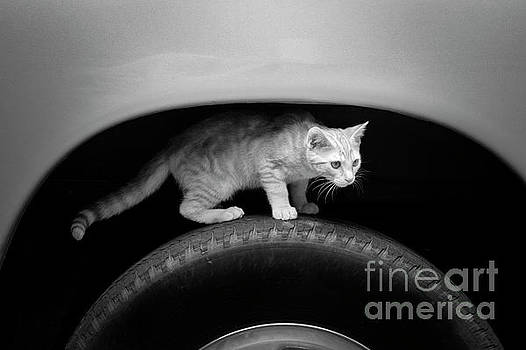 Cat In The Wheel Well by Patrick M Lynch