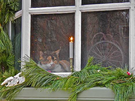 Cat in the Window by E Robert Dee