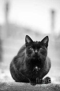 Cat by Jelena Jovanovic