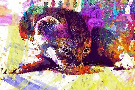 Cat Kitten Cat Baby Pet  by PixBreak Art