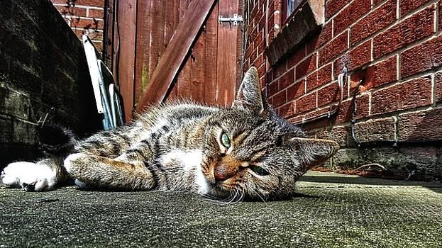 Cat life by Pedro Fernandez