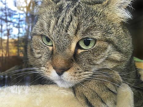 Cat Looking Outdoors by Susan Leggett