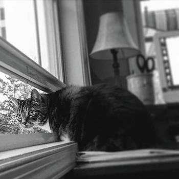 #cat #love #justanotherdayattheoffice by Sharon Halteman