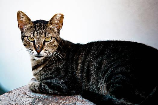 Cat by Mei Li Ronfeld