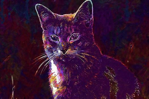 Cat Mieze Tiger Cat Breed Cat  by PixBreak Art