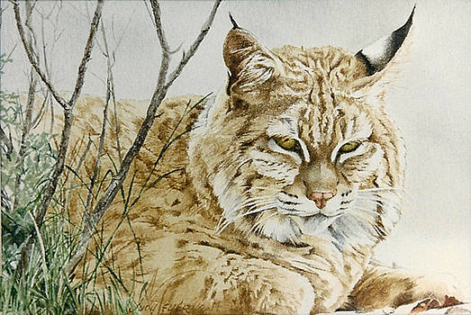 Cat Nappin by Judith Angell Meyer