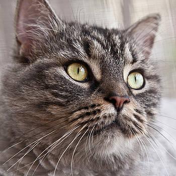 Heiko Koehrer-Wagner - Cat of Nicole 4