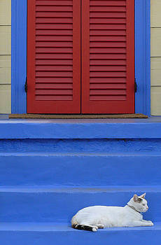 Cat on Blue Steps by Jeanne  Woods