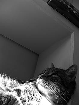Cat on Shelf by Christian Orti