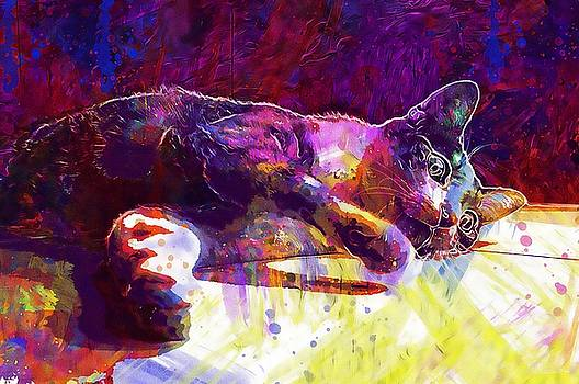 Cat Pet Lying Lazy  by PixBreak Art