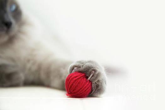 Cat play by Ines Leonardo