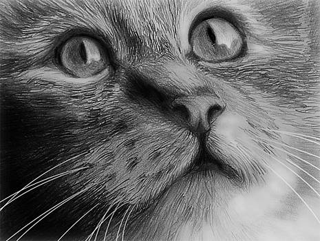 Cat Portrait by William Hay