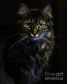 Cat Portrait- Zoey  by Jamie Kerns