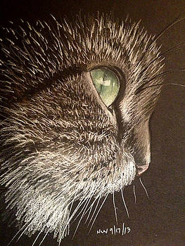 Cat profile by Holly Whiting