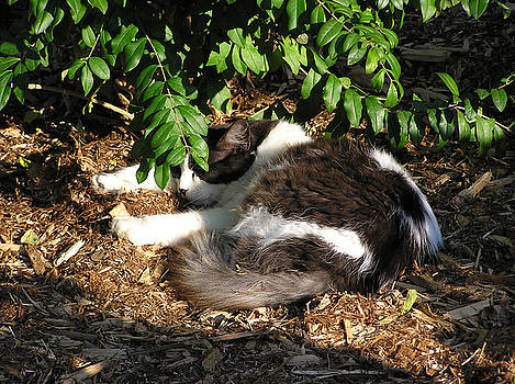 Cat Resting Under Tree by Richard Mitchell