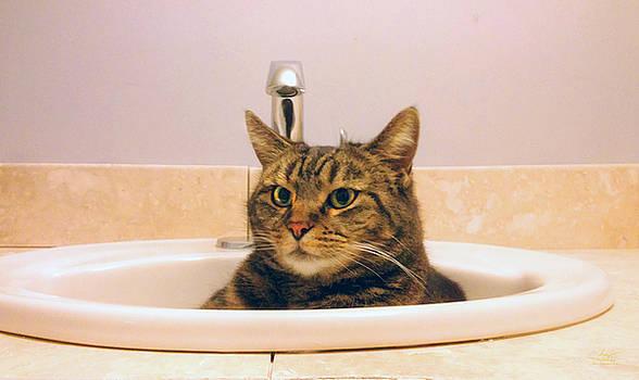 Sam Davis Johnson - Cat Shower for Gizmo
