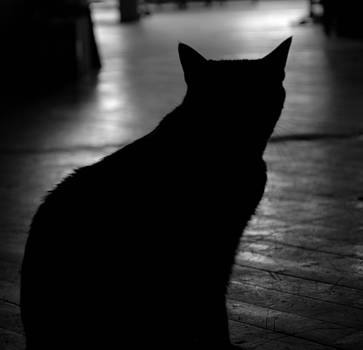 Cat Silhouette by Dave Fischer