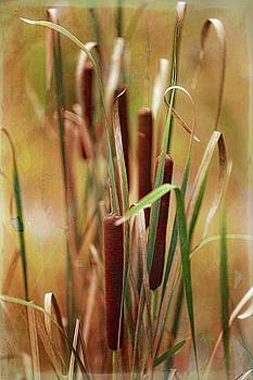 Cat Tails by Scott Fracasso