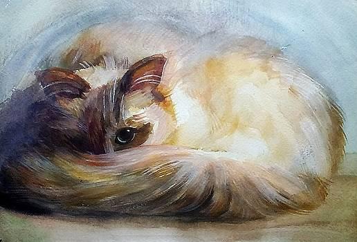 Cat by Valeriya Temnenko