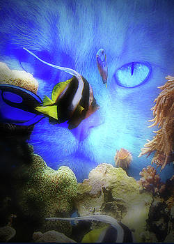 Cat Watching Fish In Tank by Stephanie Laird