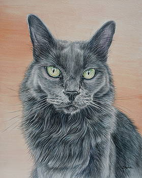Cat with Green Eyes by Gail Dolphin