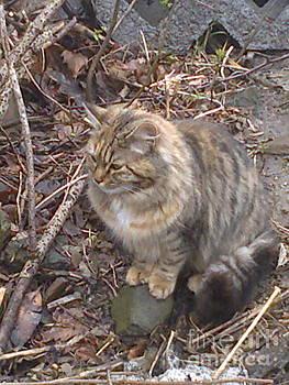 Cat  by Zornitsa Tsvetkova