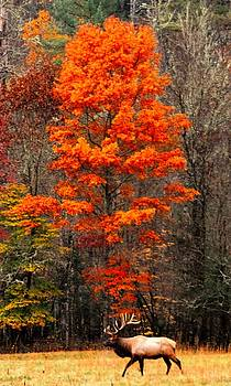 Cataloochee Color by CK Brown