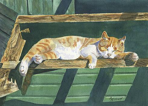 CATatonic by Marsha Elliott