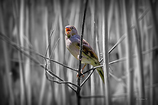 Catbird In The Reeds - Color Select by Brian Wallace