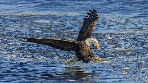 Catching Lunch by E Mac MacKay