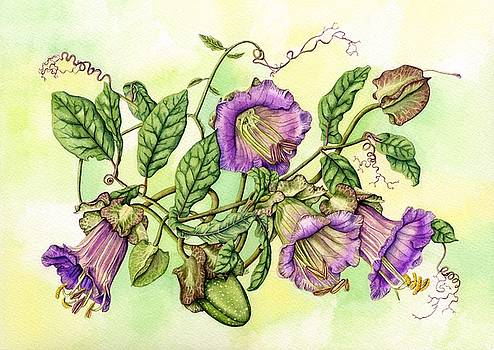 Cathedral Bell, Cobaea scandens by Lynne Henderson