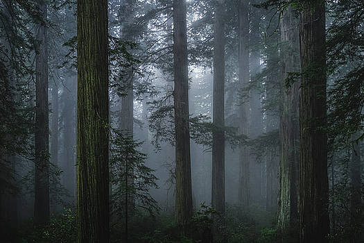Cathedral Forest by Daniel Johnson-Utsogn