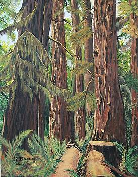 Cathedral Grove  by Sharon Duguay