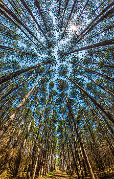 Cathedral In The Pines by Brad Bellisle