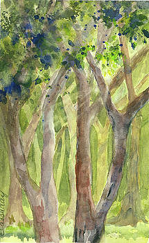 Cathedral of Trees by Evelyn Cassaday