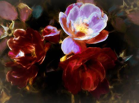 Cathexis Of Roses by Debra Lynch